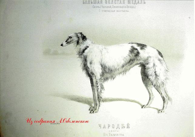 http://www.borzoi-mooir.ru/reading/borzoys_album/images/Charodey.jpg