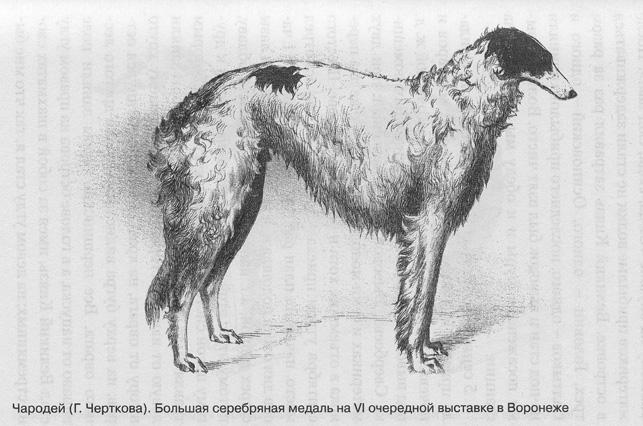 http://www.borzoi-mooir.ru/reading/borzoys_album/images/Charodey_1.jpg