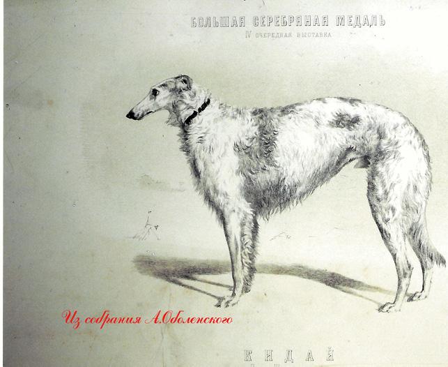 http://www.borzoi-mooir.ru/reading/borzoys_album/images/Kiday.jpg