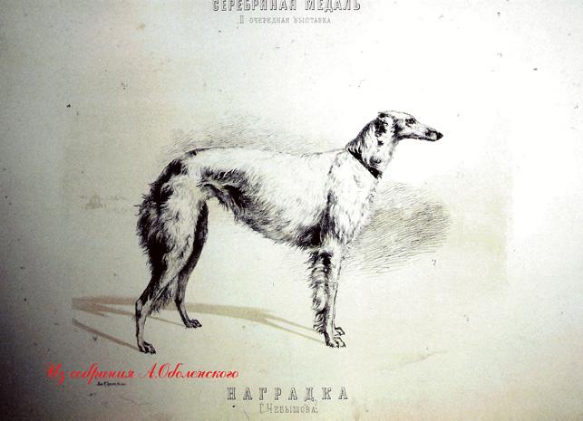 http://www.borzoi-mooir.ru/reading/borzoys_album/images/Nagradka_1.jpg
