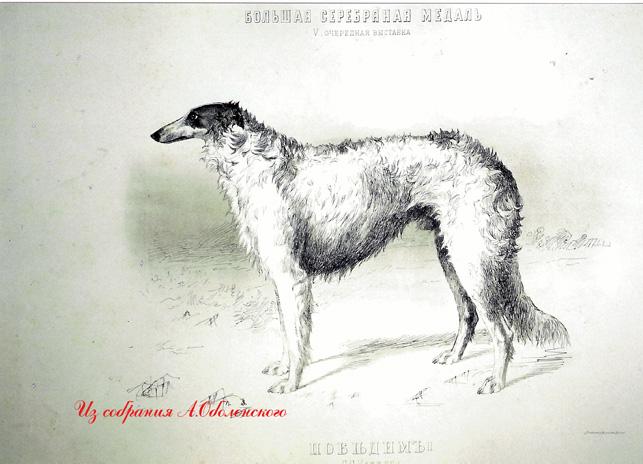 http://www.borzoi-mooir.ru/reading/borzoys_album/images/Pobedim.jpg