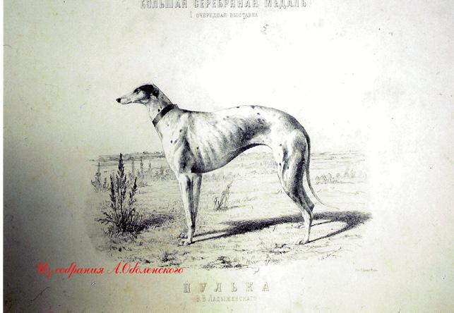 http://www.borzoi-mooir.ru/reading/borzoys_album/images/Pulka_eng.jpg
