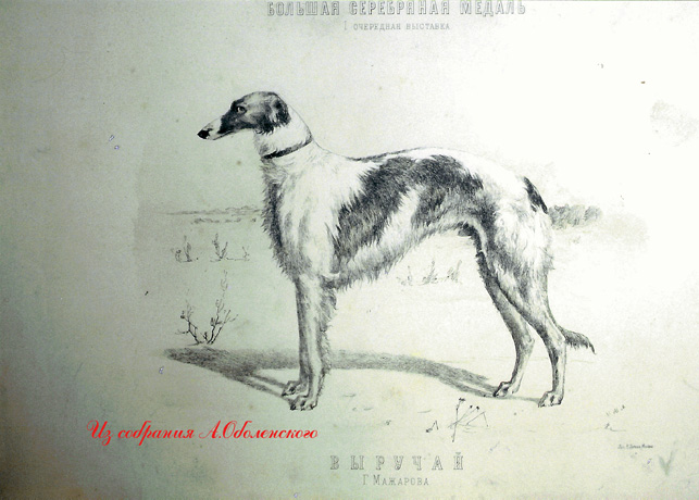http://www.borzoi-mooir.ru/reading/borzoys_album/images/Viruchay.jpg