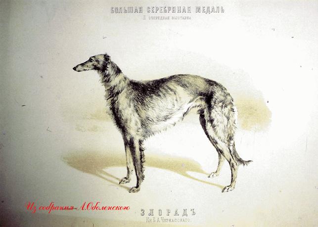 http://www.borzoi-mooir.ru/reading/borzoys_album/images/Zlorad.jpg